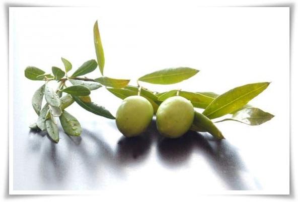 オリーブの木の花言葉は「平和」と「知恵」